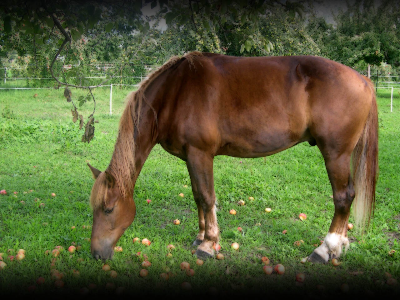 Fonds d 39 cran cheval 2 horse wallpapers 2 wallpapers for Fond ecran cheval