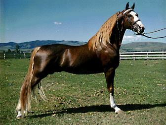 cheval tennessee