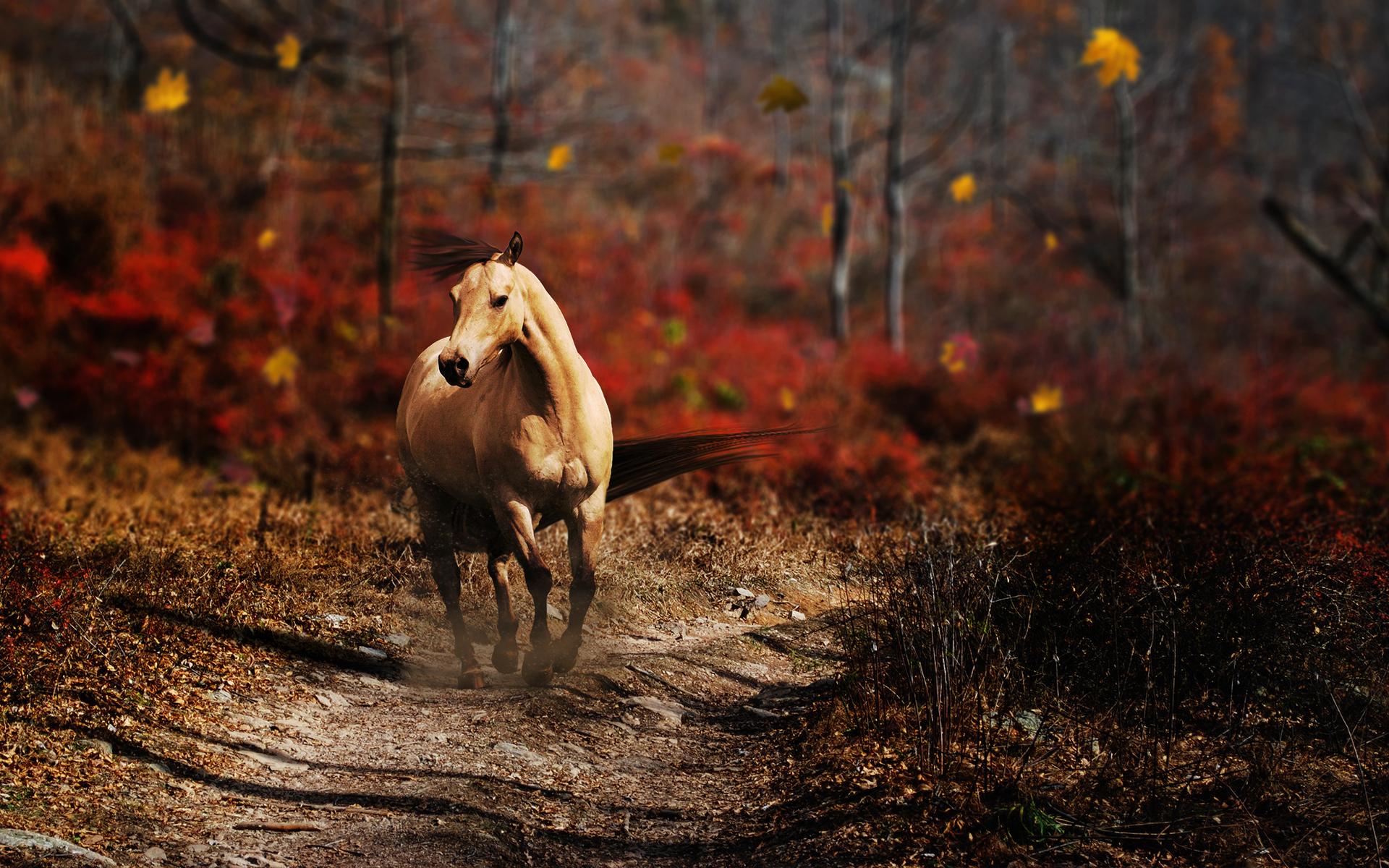 cheval wallpaper hd 1 - photo #17