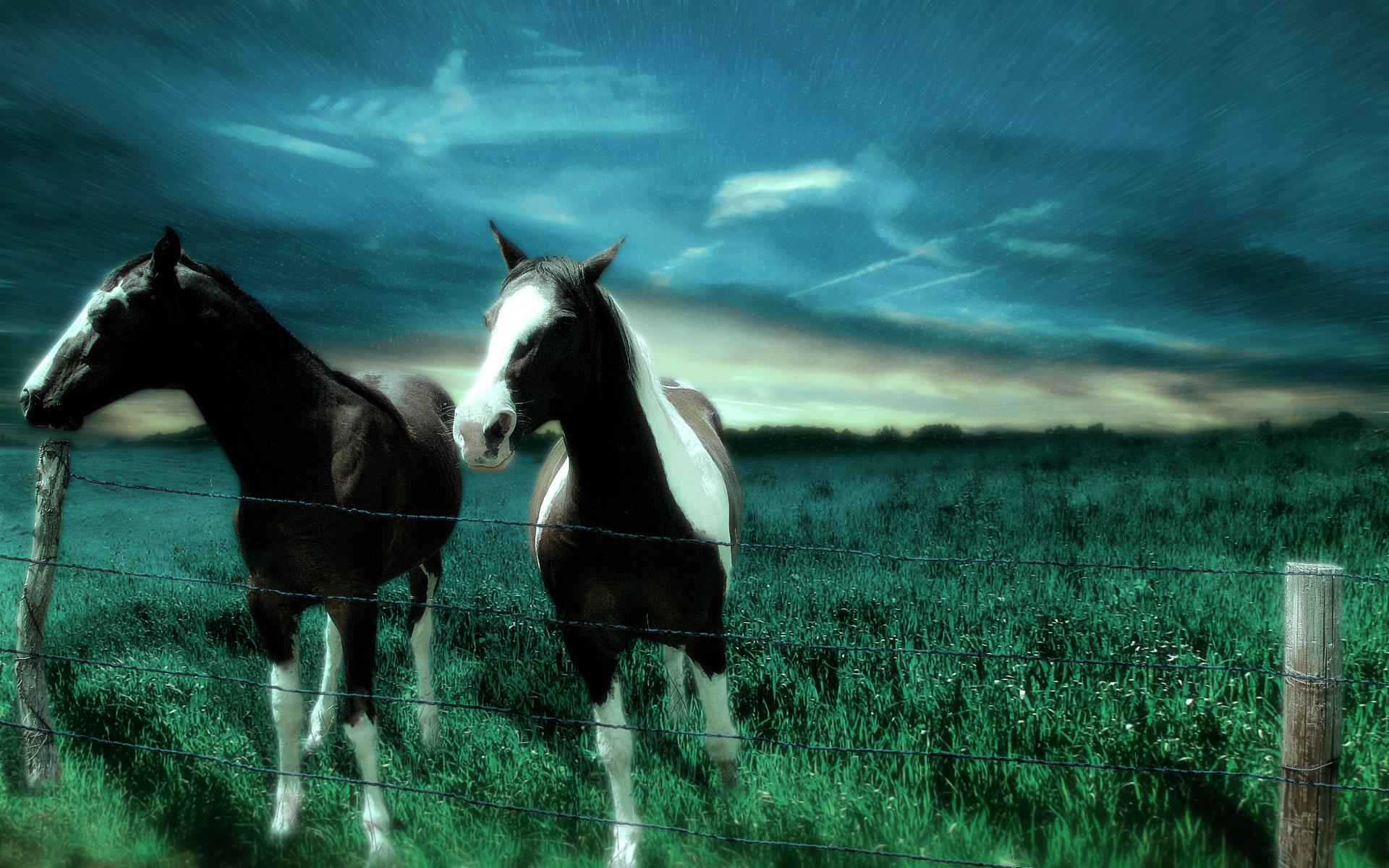 cheval wallpaper hd 1 - photo #13